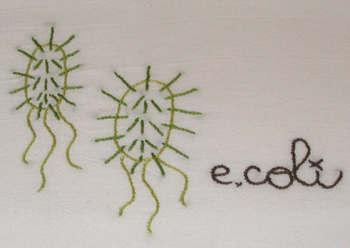 Detail_e_coli_1